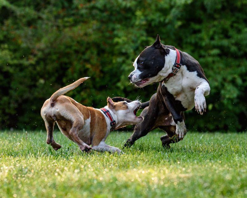 運動量の多い犬