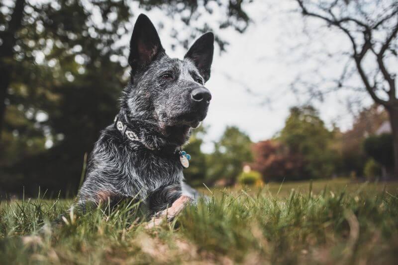 犬のDNA