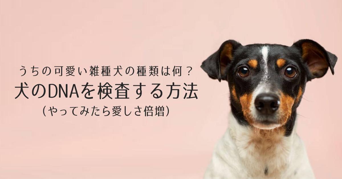 うちの可愛い雑種犬の種類は何?犬のDNAを検査する方法