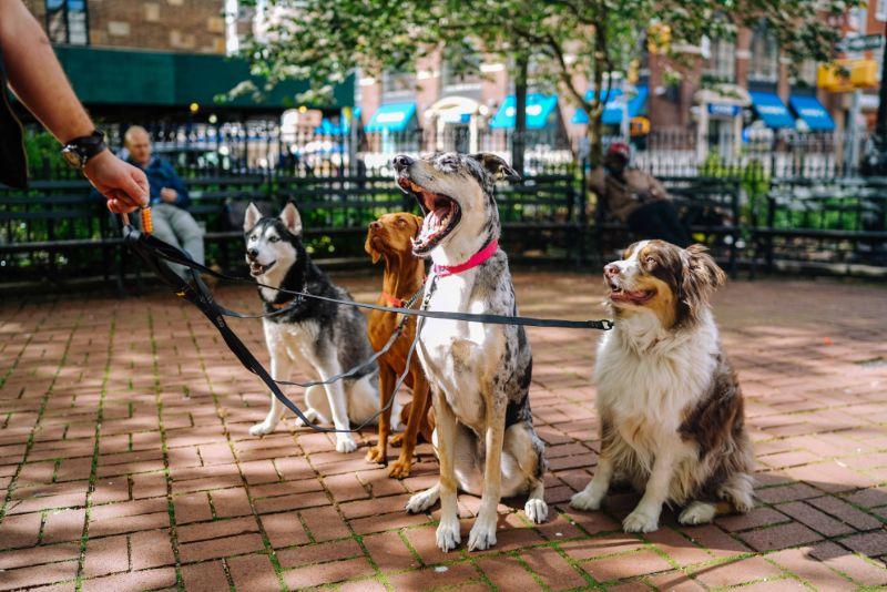 犬種による性格の違い