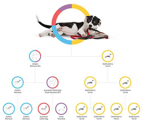 embark 犬DNAテストの結果