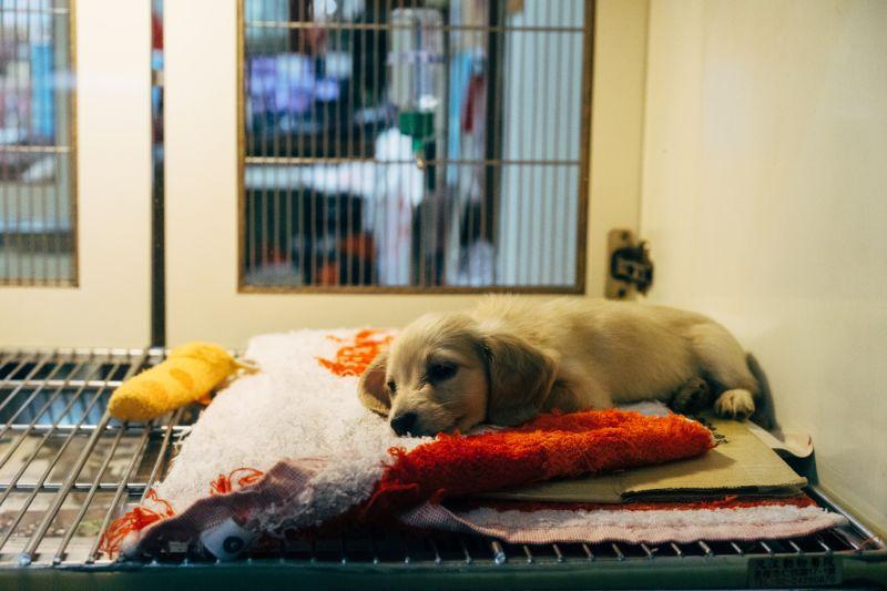 ペットショップで売られる子犬