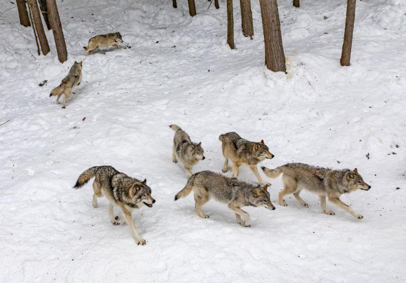 犬は群れの動物